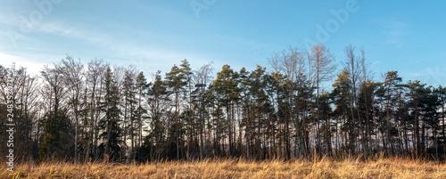 Fényképezés  Banner Wald mit Gras im schneelosen Winter