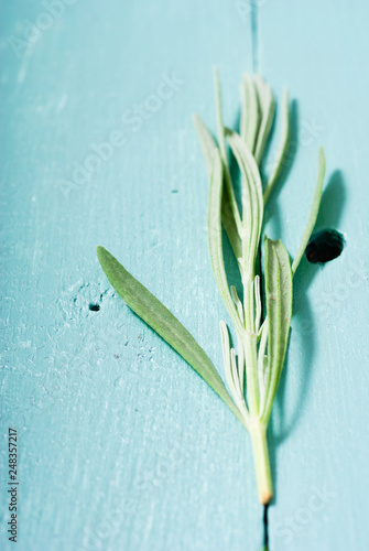 Poster Muguet de mai leaf collection on blue painted wooden table background