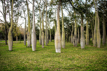 Beautiful Park Of Bottle Trees...