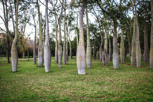 Beautiful Park Of Bottle Trees In Valencia, Spain
