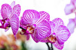 Selrcted garden orchid flower for decor