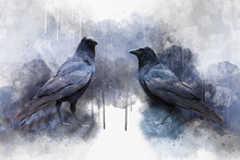 Portrait Of Two Crow Birds, Watercolor Painting. Bird Illustration