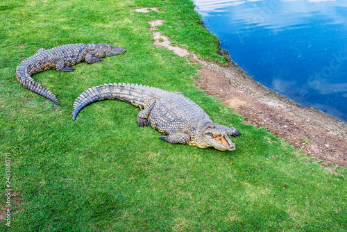 Tuinposter Krokodil Crocodiles on a crocodile farm in South Africa