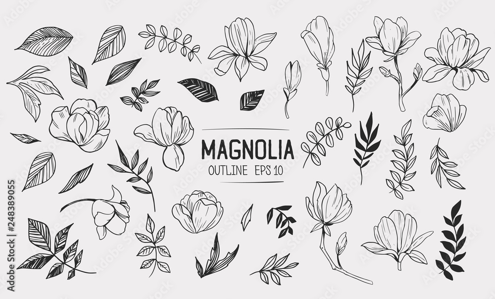 Fototapety, obrazy: Set of magnolia with leaves. Floral elements for design. Vector. Isolated