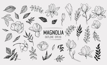 Set Of Magnolia With Leaves. F...