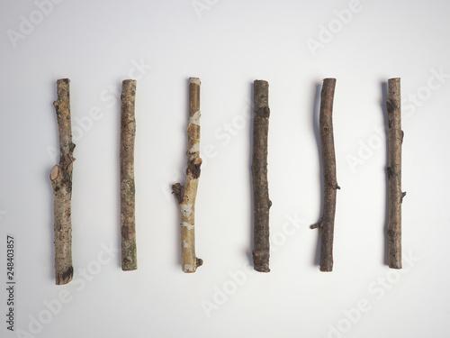 Fotografie, Obraz  木の枝