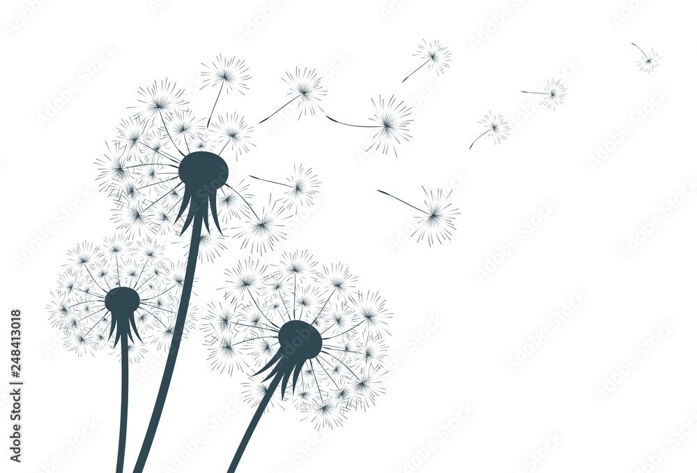 Fototapety, obrazy: Flower of field dandelion