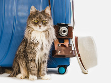 Cute Kitten, Stylish Blue Suitcase, Fashionable Sun Hat And Vintage Camera. White, Isolated Background. Close-up. Side View. Preparing For The Summer Trip