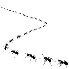 Silhouette Of Ants That Crawl ...