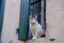 Façade D'une Maison, Un Chat Blanc, Gris, Tacheté Assis Sur La Fenêtre, Langue Tirée.