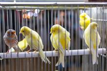 Small Colored Decor Birds In C...