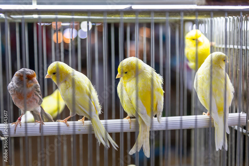 Fotografia small colored decor birds in cage