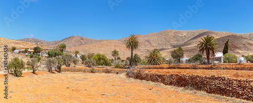 Staande foto Tunesië Palm Trees Panorama in Fuerteventura