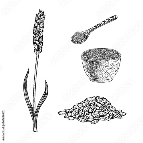 Fotografia Hand drawn set of spelt plant porridge in bowl, spoon and seeds