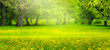 canvas print picture - idyllische parklandschaft panorama hintergrund