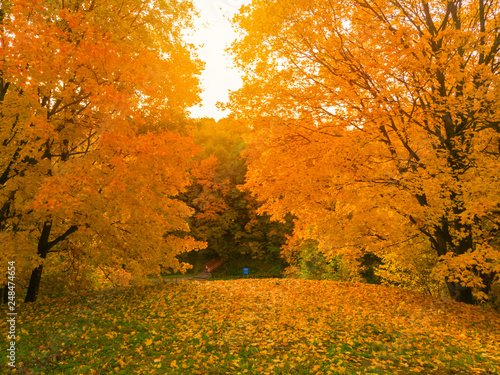 Deurstickers Herfst autumn and yellow maple leaves in the park in Kolomenskoye park in autumn season aerial view, Moscow, Russia.
