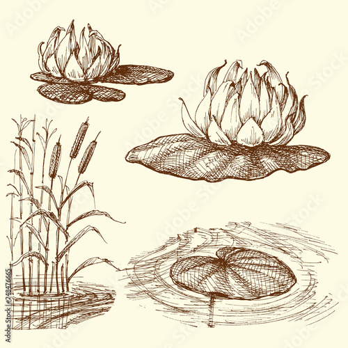Fototapeta Water lily and water plants set