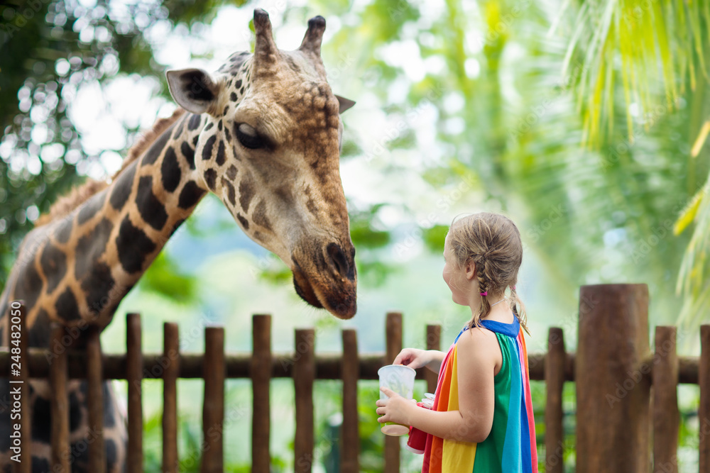 Fototapeta Kids feed giraffe at zoo. Children at safari park.