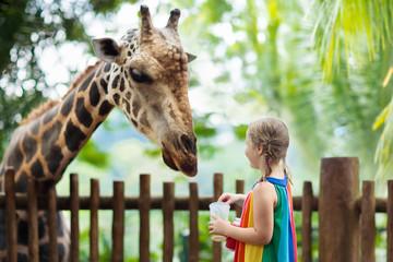 FototapetaKids feed giraffe at zoo. Children at safari park.