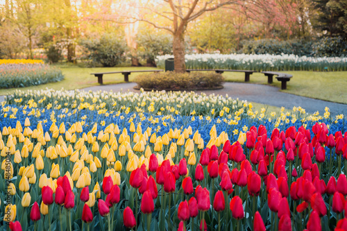 Keukenhof Gardens, flowers and tulips. Netherlands