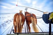Fahrt Mit Dem Pferdeschlitten ...