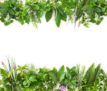Fresh Garden Herbs Isolated On...
