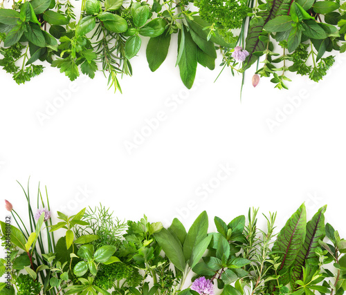 Fotografia Fresh garden herbs isolated on white background