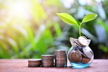 Plant Money Coins Saving Growth Up To Profit And Investment Fund Finance Business
