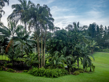 Lush Vegetation And Palms In T...
