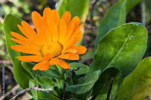 Fotografia  Piękny żółty kwiat