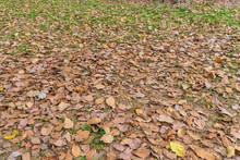 落ち葉に覆われた地面