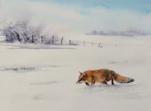 Winter Scene From The Wild Nat...