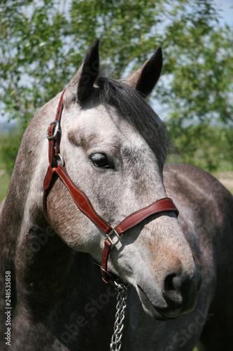 Photo  Horse in field