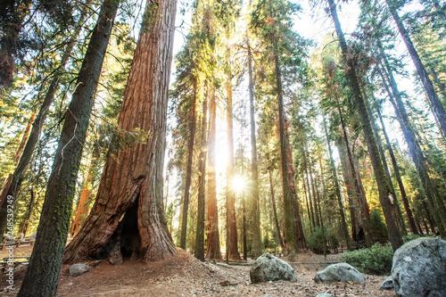 Poster de jardin Parc Naturel Sunset in Sequoia national park in California, USA