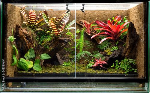Fototapeta tropical rain forest terrarium