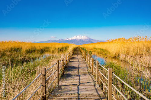 Fotografie, Obraz Wooden bridge walkway path on marshes and reeds in front of mountain