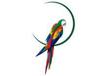 Parrot Logo Idea Design, Beautiful Scarlet Macaw Bird In Natural Color, Vector Illustration Isolated Or White Background
