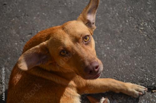 Foto  Cachorro de rua olhar