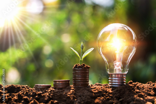 Fototapeta light bulb on soil with young plant growing on money stack. saving finance and energy concept obraz