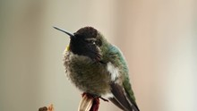 Hummingbird On Cold Winter Day