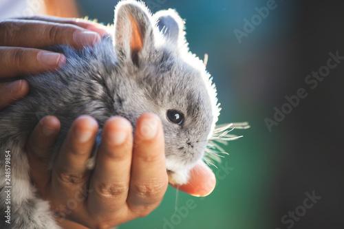 Carta da parati Cute little bunny rabbit in hands