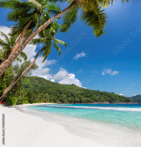 Beautiful sandy beach with coconut palm trees and turquoise sea. Wall mural