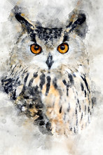 Owl - Watercolor Illustration ...