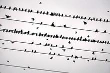 A Bird Is Like A Staff