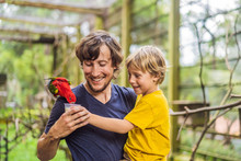 Dad And Son Feed The Parrot In The Park. Spending Time With Kids Concept