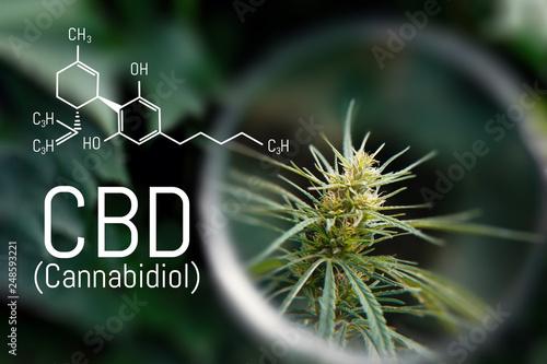 Photo  Medical Marijuana and Cannabidiol CBD oil chemical formula