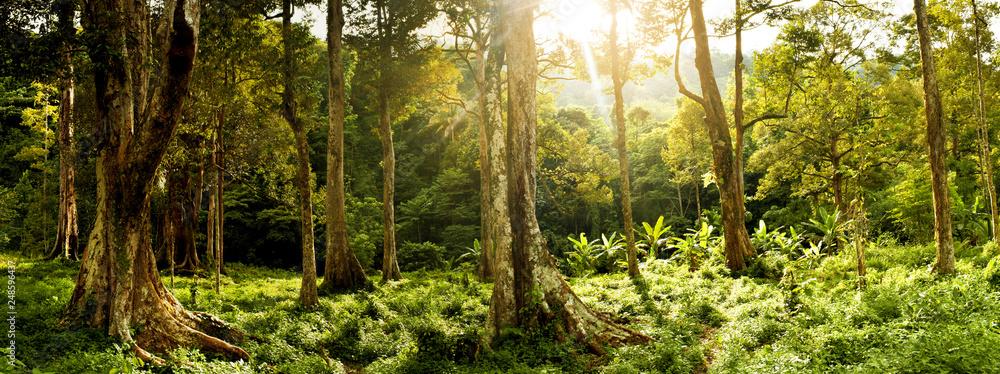 Fototapety, obrazy: Labuhan haji aceh,forest