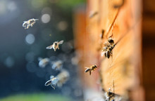 Close Up Of Flying Bees. Wooden Beehive And Bees, Blured Background.