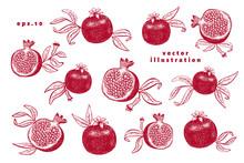 Pomegranate Fruit Illustrations Set. Hand Drawn Vector Fruit Illustrations. Engraved Style Vintage Botanical Background. Can Be Use For Design Menu, Packaging, Recipes, Market Products.