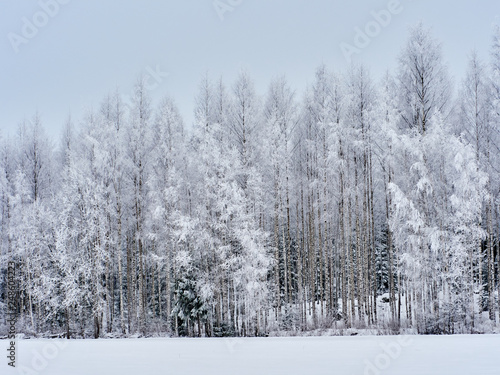 Poster Fleur Snowy forest background